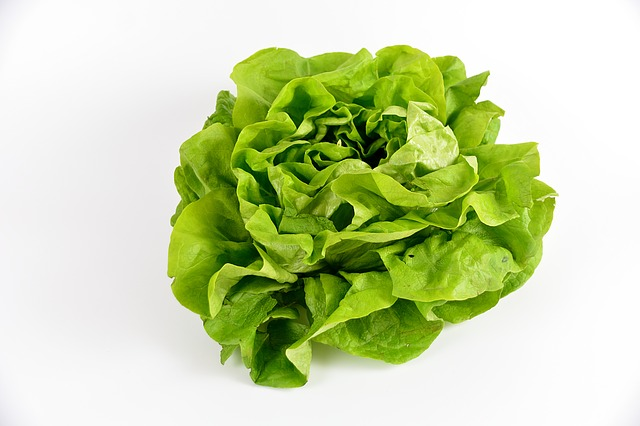 salade verte sucrine